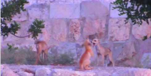 Новое знамение на Храмовой горе