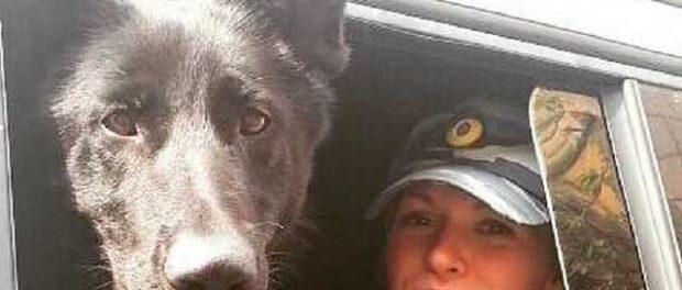 Полицейская собака по горячим следам поймала педофила в Петербурге
