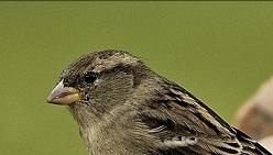 Массовое вымирание птиц на Земле