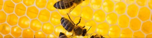 Пчелы могут считать
