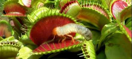 Живые бактерии защищают растения от инфекций
