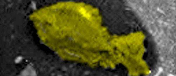 Марсаход Curiosity нашел в пустыне Невады дохлую рыбу