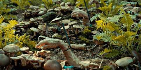 Дожили: из трупов начали делать компост