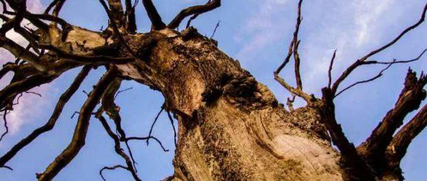 Самый старый известный лес в мире обнаружен в Нью-Йорке