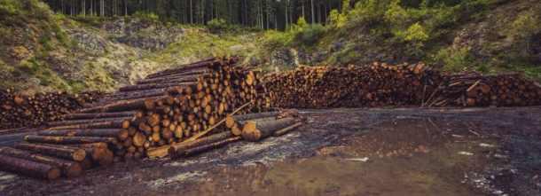 Вырубка Амазонки грозит катастрофой всей Земли
