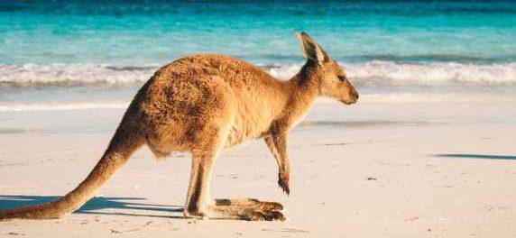 Правительство Австралии выделяет $52 миллиона на возрождение индустрии туризма в стране