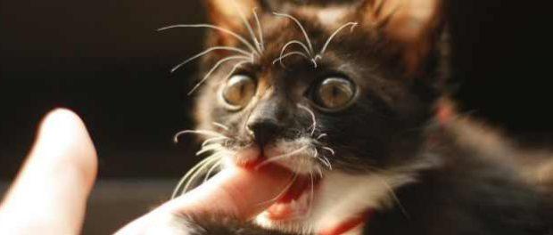 Голодные кошки едят человеческие трупы