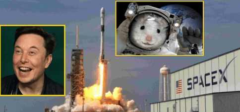 NASA неудачно пошутило с крысой на борту SpaceX