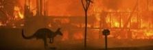 Пожары в Австралии обанкротили её народ