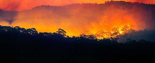 Пожары в Австралии могут ускорить скачок CO2 в 2020 году