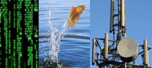 В Ухане от коронавируса рыба сошла с ума