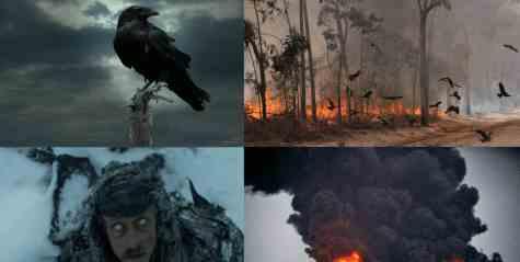 Причиной пожаров в Австралии стали коршуны