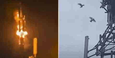 Птицы атакуют вышки 5G