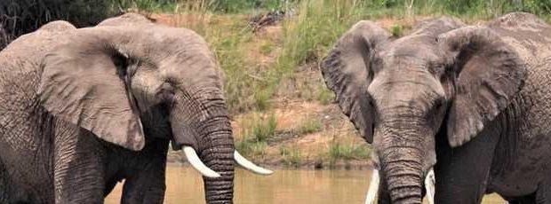 В Индии мужчина предпочел завещать землю двум слонам, а не жене