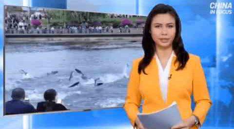 В Китае животные ведут себя очень аномально