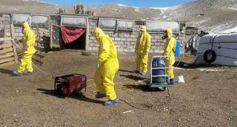 Из Монголии наступает новая чума