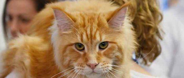Covid-19 накинулся на кошек и собак