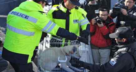 Ким Чен Ын отожмет всех  собак у населения