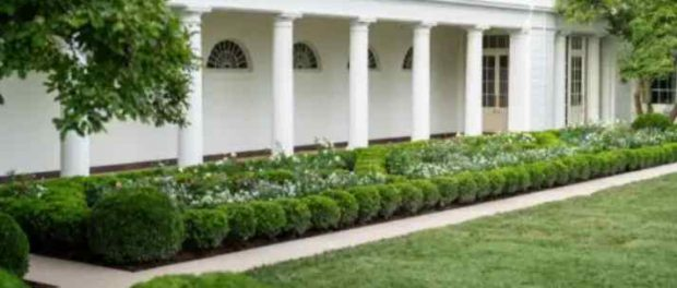 Мелания Трамп «выкопала» розарий в Белом доме?