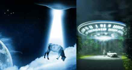 Пришельцы опять начали жрать коров в Орегоне