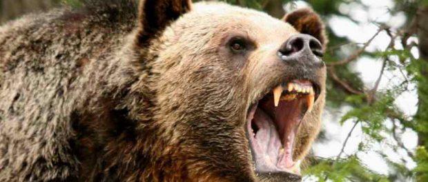 Охотник пошел на медведя, но тот оказался хитрее