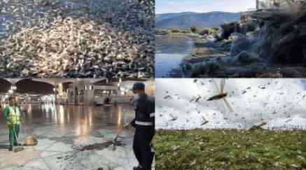 Тучи тли атаковали Красноярск, остальной мир уже в аду