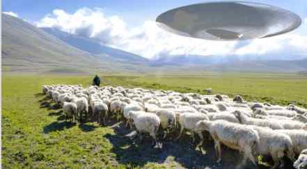 Стрижка овец орбитальными хозяевами