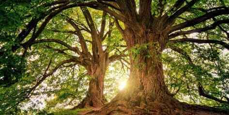 Ученые говорят, что слишком много co2 убивает деревья