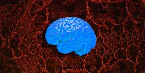 Ученые обнаружили сходство сетями и мозгом